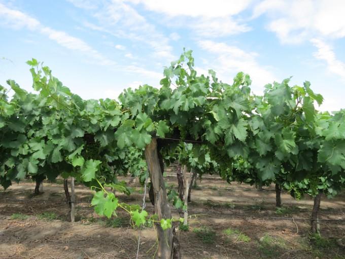 cafayate winery 0