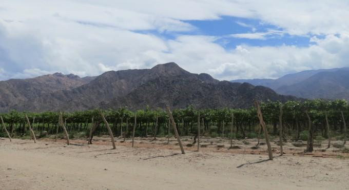 cafayate winery 1