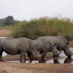 南アフリカのサファリに遊ぶ ①